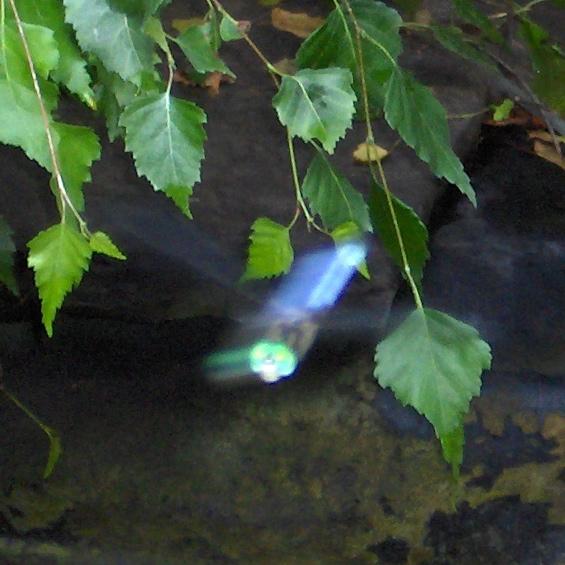 dragonfly-in-flight2.JPG