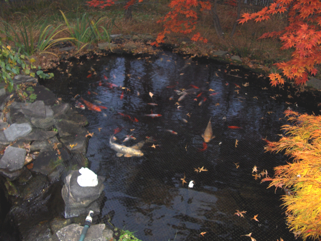 pond fall 2006 with gentle girl